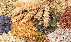 semi-cereali-legumi